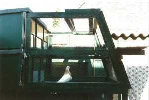 Duiventillen zijn voor duivenliefhebber een felbegeerd bezit
