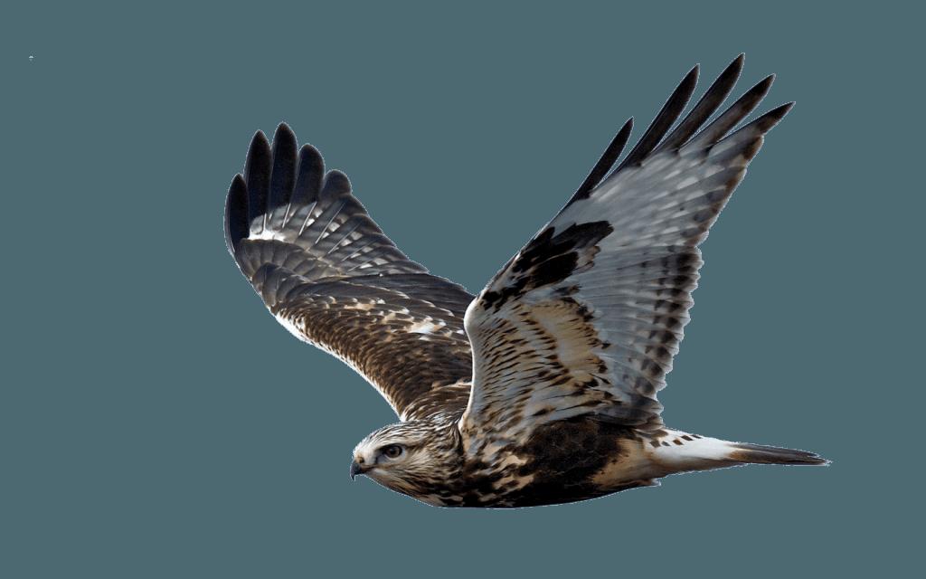 Schrikbarend gestegen aantal roofvogels