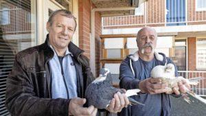Roofvogel doet duivenclub wanhopen